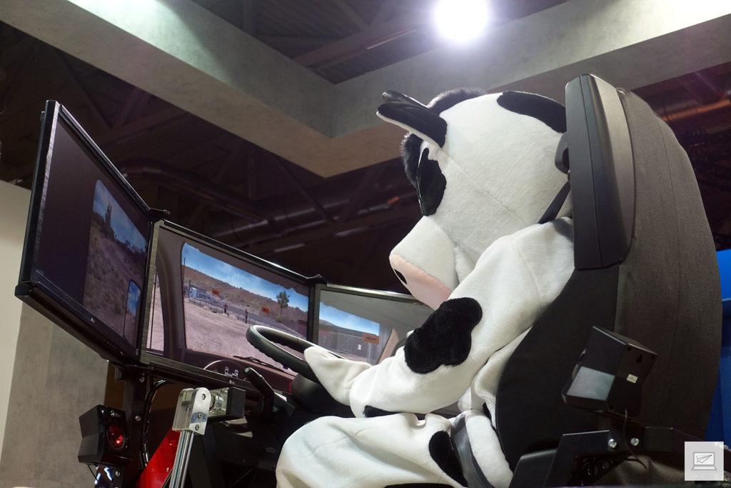 Auch Kühe können LKW fahren...