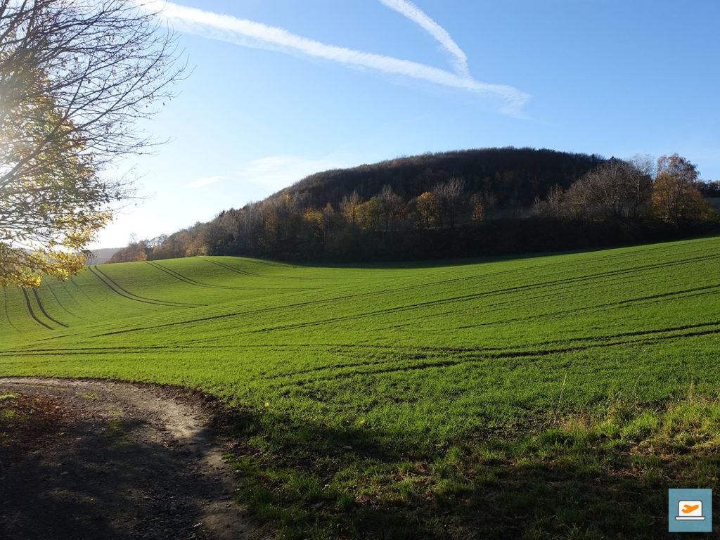 Hier gab es wenig Wald und dafür viele weite grüne Felder